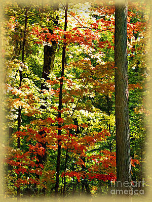 Photograph - Simply Autumn by Joan  Minchak