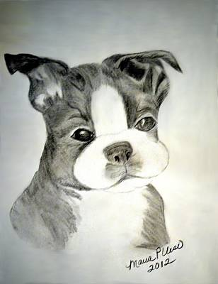 Drawing - Simply Irresistable by Maria Urso
