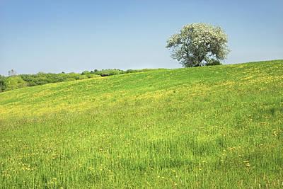 Maine Meadow Photograph - Single Apple Tree In Maine Hay Field by Keith Webber Jr