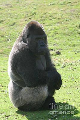 Sitting Gorilla Art Print by Carol Wright