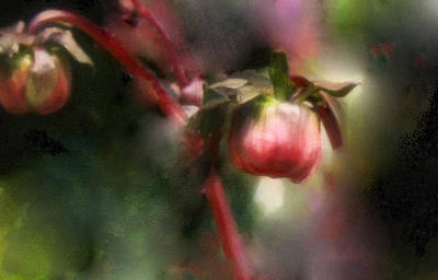 Photograph - Small Wonders by Carol Kinkead