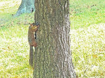 Smiling Squirrel Print by Joseph Hendrix