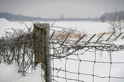 Snow Fence  Art Print by Sandra Cunningham