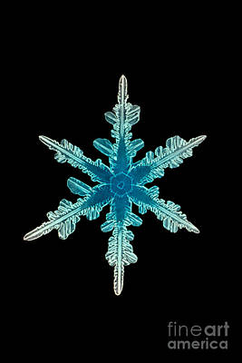 Photograph - Snowflake Crystal by Science Source