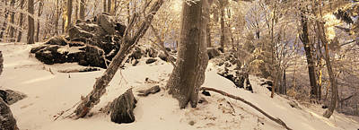 Mellow Yellow - Snowy forest by Ulrich Kunst And Bettina Scheidulin
