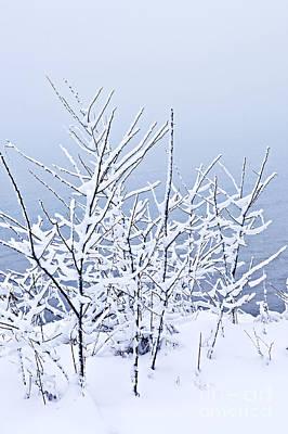 Snowy Trees Art Print by Elena Elisseeva