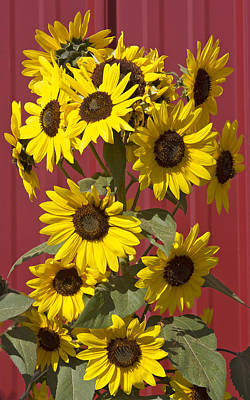 So Many Sunflowers Art Print