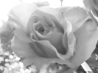 Photograph - Soft Petals by Jen Sparks