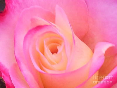 Photograph - Soft Pink Rose by Saifon Anaya