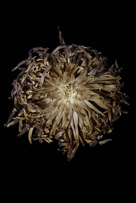 Spiky Flower Art Print by Nathaniel Kolby
