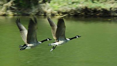 Goose Photograph - Spread Your Wings And Fly by LeeAnn McLaneGoetz McLaneGoetzStudioLLCcom