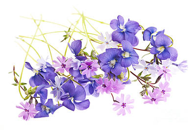 White Background Photograph - Spring Flowers by Elena Elisseeva