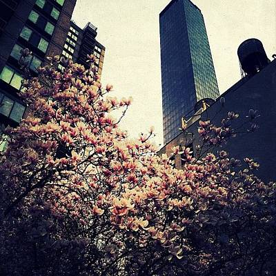 Spring Wall Art - Photograph - Spring In Manhattan by Natasha Marco