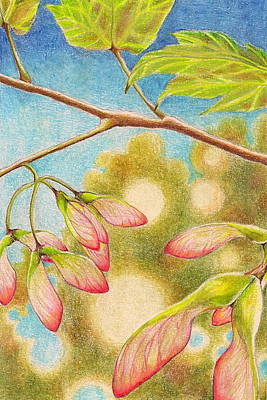 Drawing - Springtime  by Robin Birrell