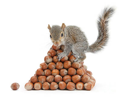 Squirrel And Nut Pyramid Art Print by Mark Taylor
