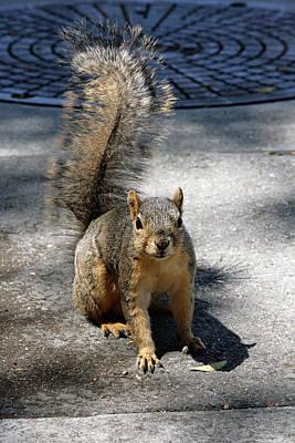Photograph - Squirrel by Masha Batkova