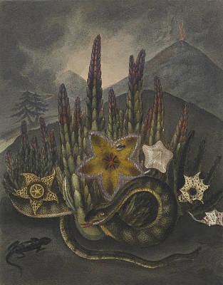 Stapelius  Print by Robert John Thornton