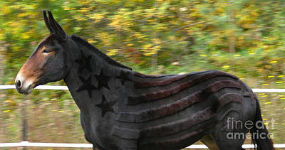 Photograph - Star Spangled Mule by Deborah Johnson