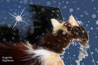 Digital Art - Starry Cat  by Augusta Stylianou
