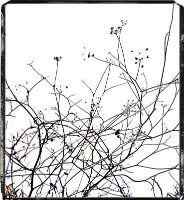 Bare Trees Photograph - Stems by Bernard Jaubert