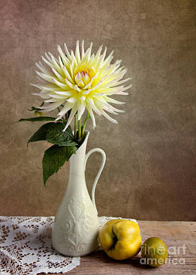 Dahlia Photograph - Still Life With Dahila by Nailia Schwarz