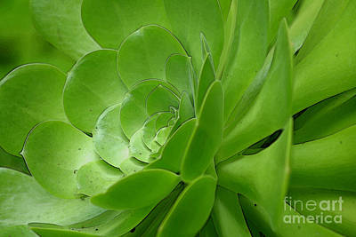 Photograph - Succulent by Morgan Wright
