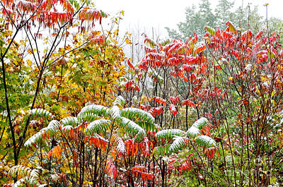 Rhus Photograph - Sumac And Snow Along The Highland Scenic Highway by Thomas R Fletcher