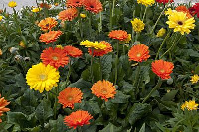 Summer Orange Flower Original
