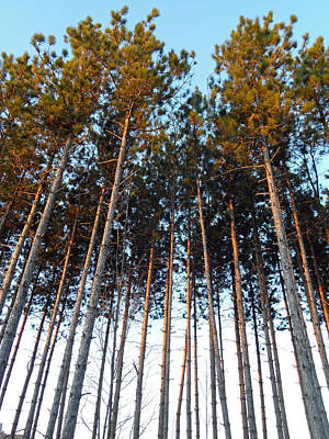 Photograph - Sundance Trees by Cyryn Fyrcyd