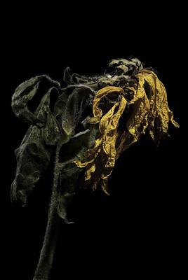 Sunflower Art Print by Nathaniel Kolby