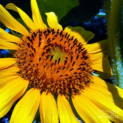Sunflower No.25 Art Print by Christine Belt