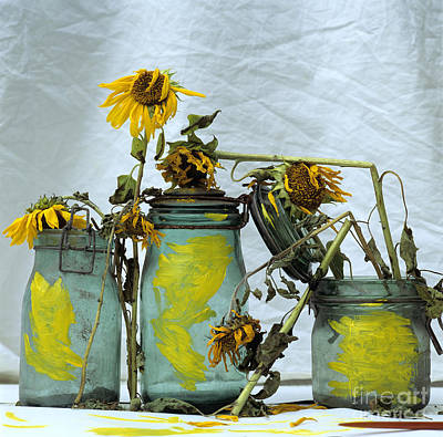 Indoor Photograph - Sunflowers .helianthus Annuus by Bernard Jaubert