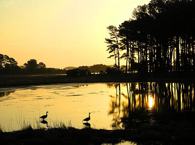 Sunrise Over Assateague Art Print by Steven Ainsworth