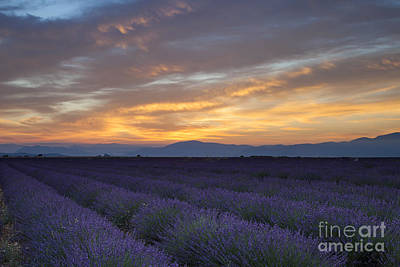 Photograph - Sunrise Over Lavender by Brian Jannsen