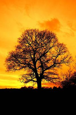 Photograph - Sunset Tree by Ed Lukas