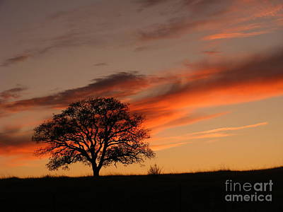 Photograph - Sunset Tree by Nancy Chambers