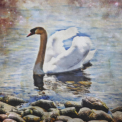 Lake Photograph - Swan by Joana Kruse