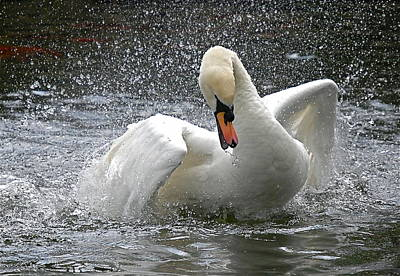 Art Print featuring the photograph Swan by Kathy Gibbons