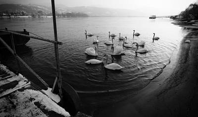 Swans On River Danube Art Print by Tibor Puski
