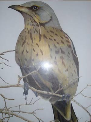 Swedish Bird Art Print by Per-erik Sjogren