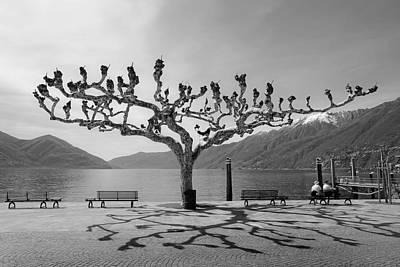 sycamore trees in Ascona - Ticino Art Print