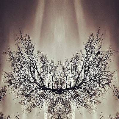 Edit Photograph - #symmetry #symmetrical #mirror by James Peto
