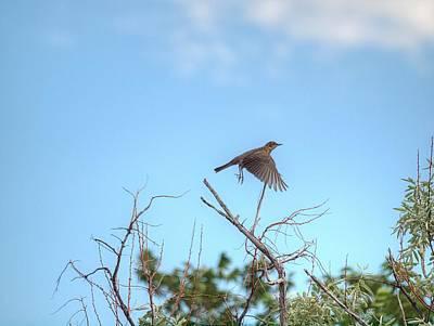 Photograph - Take Flight by HW Kateley