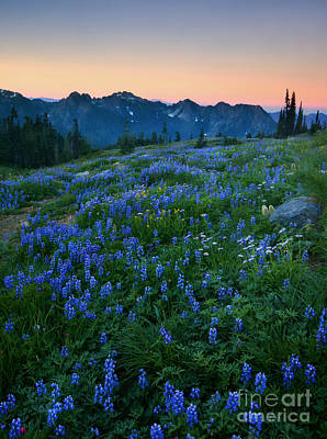 Anenome Photograph - Tatoosh Sunrise by Mike  Dawson