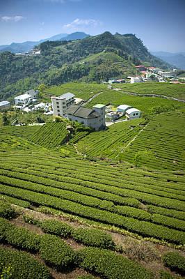 Tea Tree Photograph - Tea Garden Of Alishan by IMAGEMORE Co, Ltd.