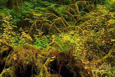 State Parks In Oregon Photograph - Temperate Rain Forest by Adam Jewell