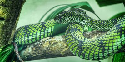 The Alert Green Snake Art Print by Noah Katz