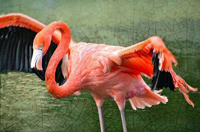 Art Print featuring the photograph The Flamingo by Rosemary Aubut