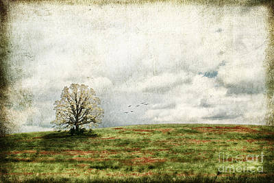 The Lone Tree Art Print by Darren Fisher