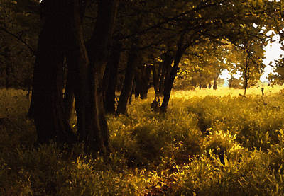 Photograph - The Magic Forest by Bogdan M Nicolae